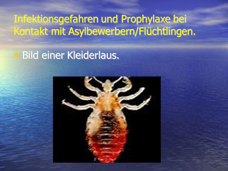 Infektionsgefahren und Prophylaxe bei Kontakt mit Asylbewerbern/Flüchtlingen. Bild einer Kleiderlaus. Bild einer Kleiderlaus.