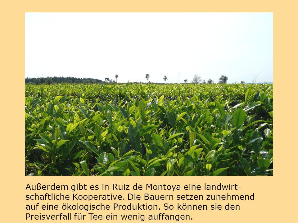 Außerdem gibt es in Ruiz de Montoya eine landwirt- schaftliche Kooperative.