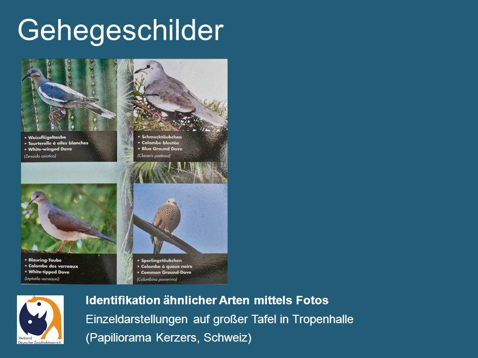 Identifikation ähnlicher Arten mittels Fotos Einzeldarstellungen auf großer Tafel in Tropenhalle (Papiliorama Kerzers, Schweiz) Gehegeschilder
