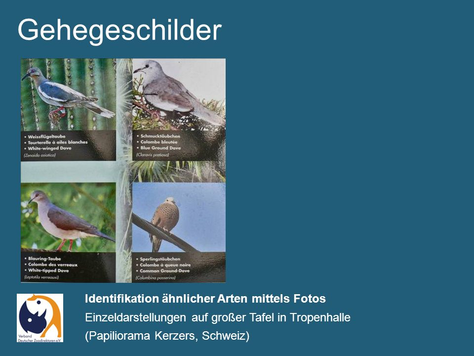 Gehegeschilder Schild ins Thema integriert – Bambushalterung im Bambuswald (Zoo Duisburg)