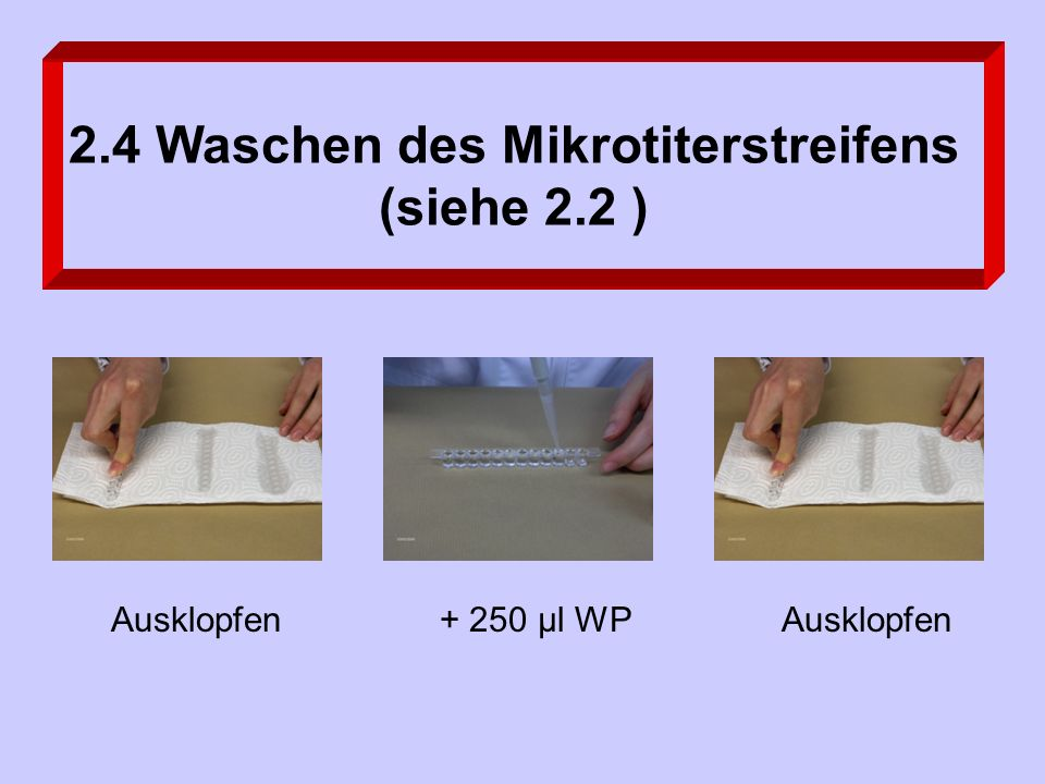 2.4 Waschen des Mikrotiterstreifens (siehe 2.2 ) Ausklopfen+ 250 µl WPAusklopfen