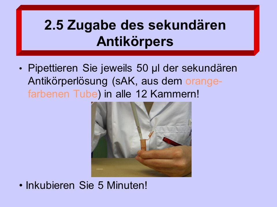 2.5 Zugabe des sekundären Antikörpers Inkubieren Sie 5 Minuten.