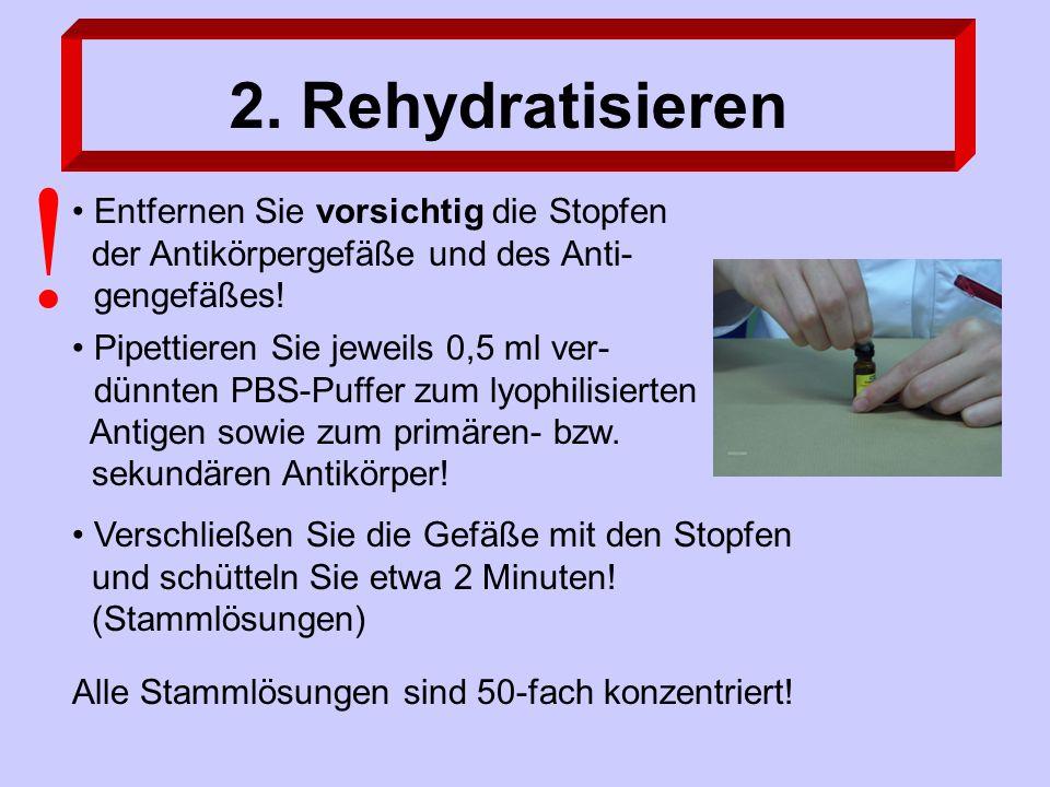 2. Rehydratisieren Pipettieren Sie jeweils 0,5 ml ver- dünnten PBS-Puffer zum lyophilisierten Antigen sowie zum primären- bzw. sekundären Antikörper!