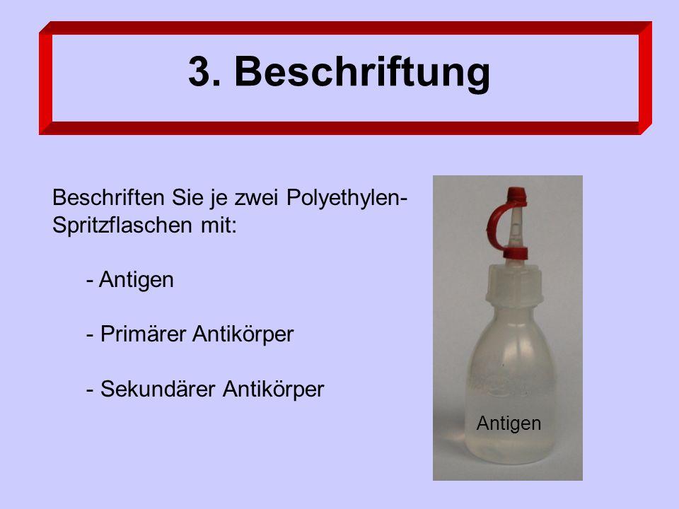 3. Beschriftung Beschriften Sie je zwei Polyethylen- Spritzflaschen mit: - Antigen - Primärer Antikörper - Sekundärer Antikörper Antigen