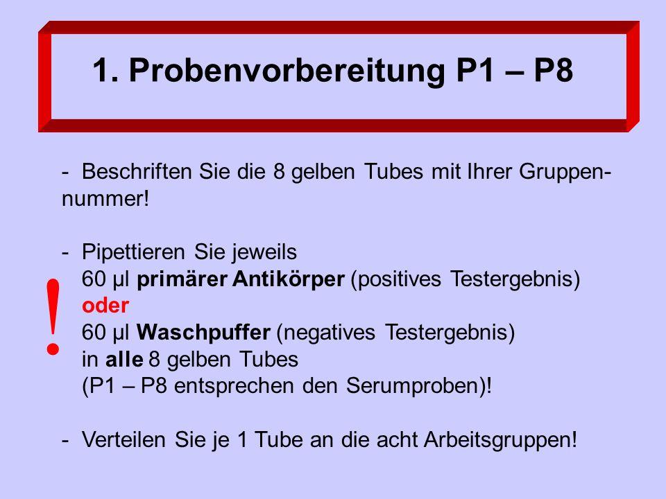 1.Probenvorbereitung P1 – P8 -Beschriften Sie die 8 gelben Tubes mit Ihrer Gruppen- nummer.