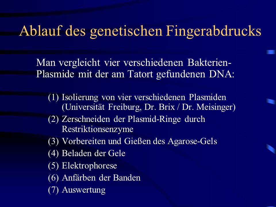 Ablauf des genetischen Fingerabdrucks Man vergleicht vier verschiedenen Bakterien- Plasmide mit der am Tatort gefundenen DNA: (1)Isolierung von vier verschiedenen Plasmiden (Universität Freiburg, Dr.