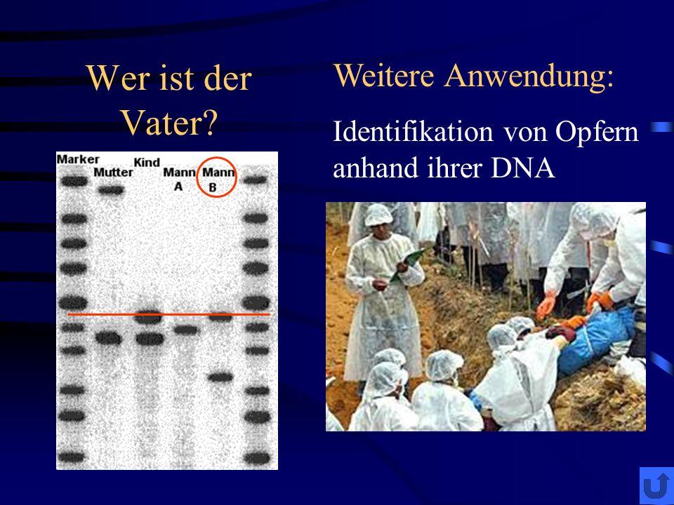 Wer ist der Vater Weitere Anwendung: Identifikation von Opfern anhand ihrer DNA