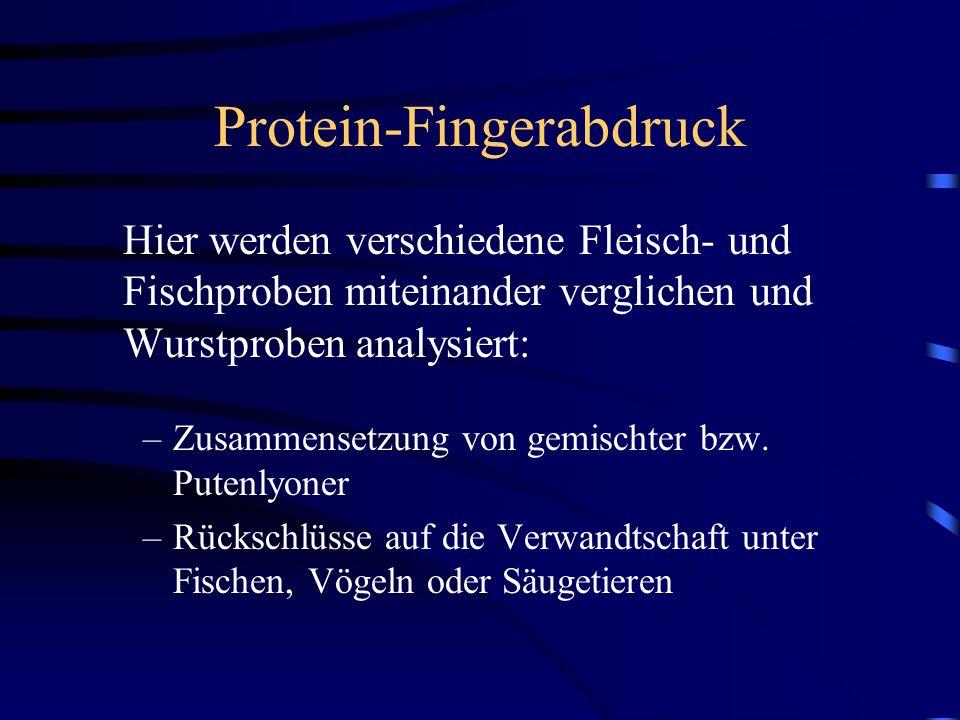 Protein-Fingerabdruck Hier werden verschiedene Fleisch- und Fischproben miteinander verglichen und Wurstproben analysiert: –Zusammensetzung von gemischter bzw.