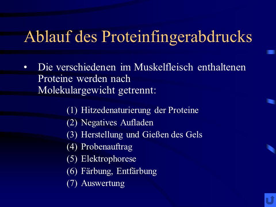 Ablauf des Proteinfingerabdrucks Die verschiedenen im Muskelfleisch enthaltenen Proteine werden nach Molekulargewicht;getrennt: (1)Hitzedenaturierung der Proteine (2)Negatives Aufladen (3)Herstellung und Gießen des Gels (4)Probenauftrag (5)Elektrophorese (6)Färbung, Entfärbung (7)Auswertung