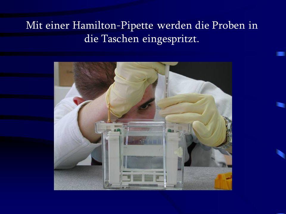 Mit einer Hamilton-Pipette werden die Proben in die Taschen eingespritzt.