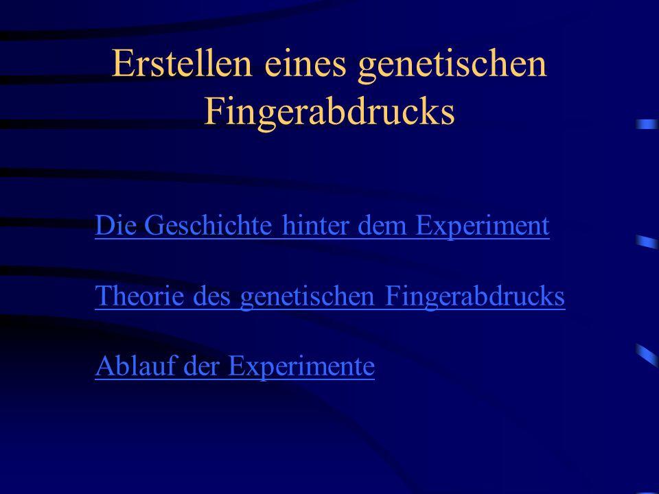Erstellen eines genetischen Fingerabdrucks Die Geschichte hinter dem Experiment Theorie des genetischen Fingerabdrucks Ablauf der Experimente