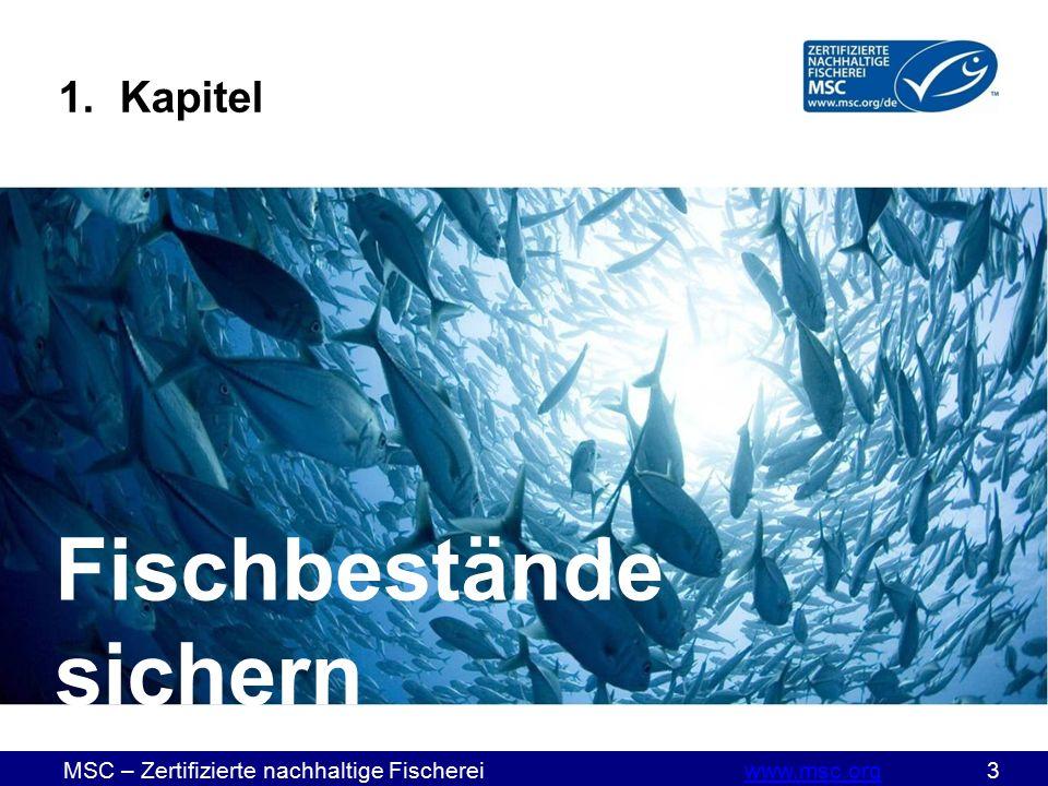 MSC – Zertifizierte nachhaltige Fischereiwww.msc.org 3www.msc.org Fischbestände sichern 1. Kapitel