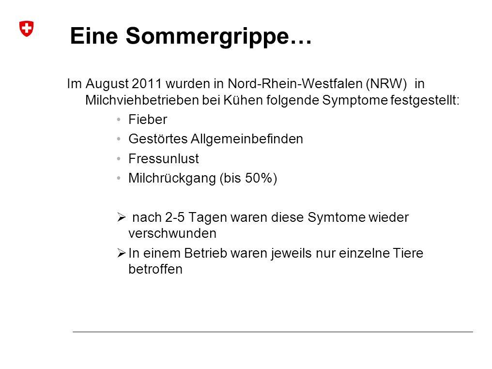 Eine Sommergrippe… Im August 2011 wurden in Nord-Rhein-Westfalen (NRW) in Milchviehbetrieben bei Kühen folgende Symptome festgestellt: Fieber Gestörtes Allgemeinbefinden Fressunlust Milchrückgang (bis 50%)  nach 2-5 Tagen waren diese Symtome wieder verschwunden  In einem Betrieb waren jeweils nur einzelne Tiere betroffen