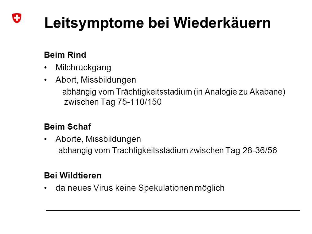 Hydranencephaly Scoliosis Arthrogryposis Arthrogryposis, Torticollis M Beer et al, FLI Riems, diverse Quellen Missbildungen bei neugeborenen Lämmern
