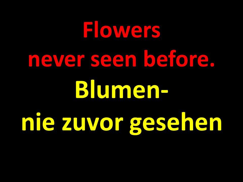 Flowers never seen before. Blumen- nie zuvor gesehen