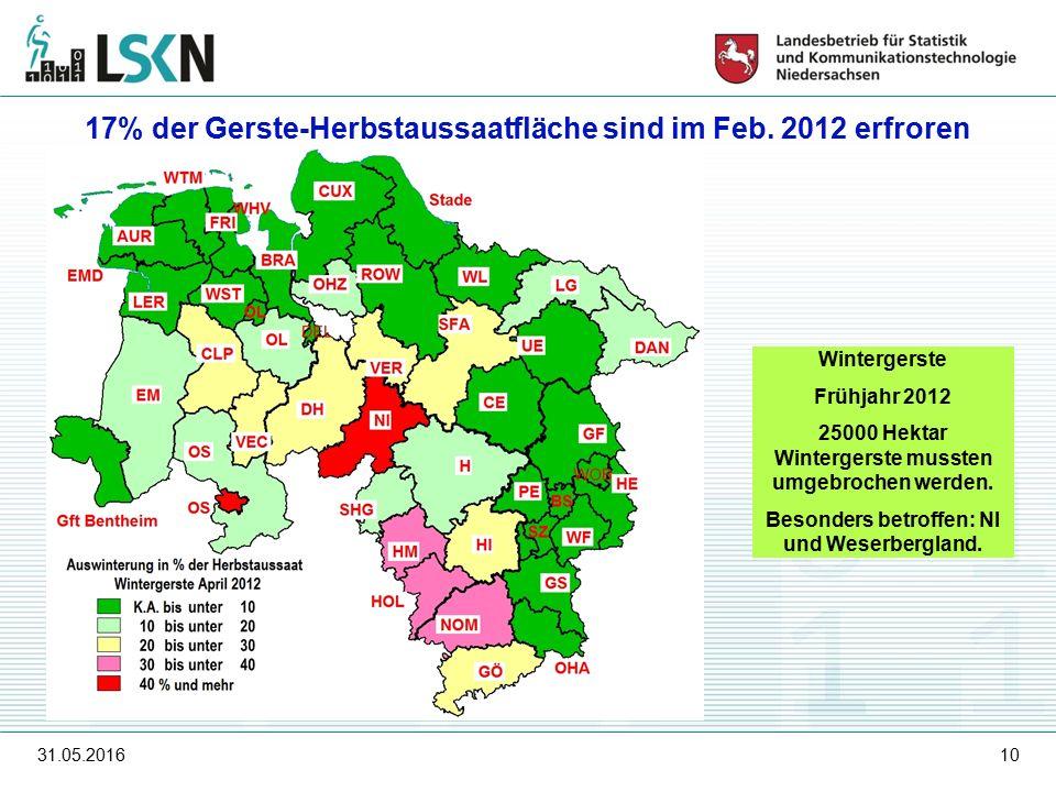 31.05.201610 Wintergerste Frühjahr 2012 25000 Hektar Wintergerste mussten umgebrochen werden.