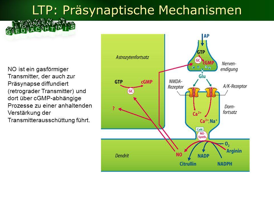LTP: Präsynaptische Mechanismen NO ist ein gasförmiger Transmitter, der auch zur Präsynapse diffundiert (retrograder Transmitter) und dort über cGMP-abhängige Prozesse zu einer anhaltenden Verstärkung der Transmitterausschüttung führt.