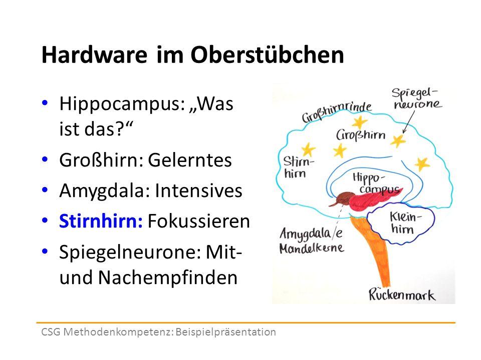 """Hardware im Oberstübchen Hippocampus: """"Was ist das Großhirn: Gelerntes Amygdala: Intensives Stirnhirn: Fokussieren Spiegelneurone: Mit- und Nachempfinden CSG Methodenkompetenz: Beispielpräsentation"""