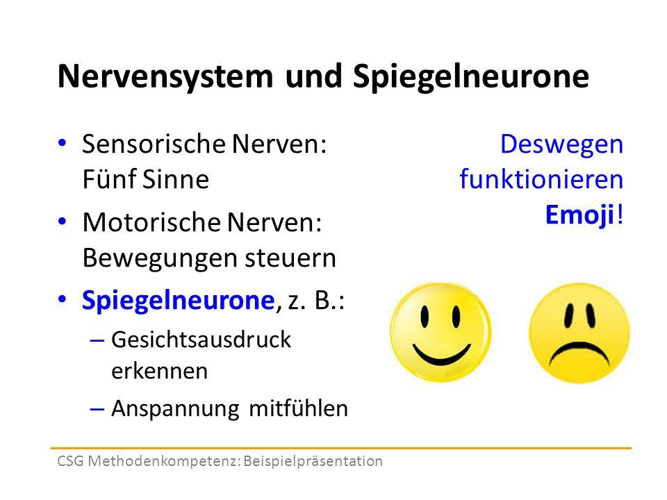 Nervensystem und Spiegelneurone Sensorische Nerven: Fünf Sinne Motorische Nerven: Bewegungen steuern Spiegelneurone, z.