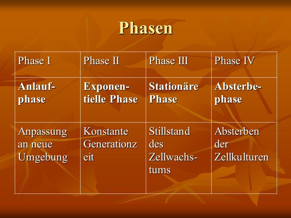 Phasen Phase I Phase II Phase III Phase IV Anlauf- phase Exponen- tielle Phase Stationäre Phase Absterbe- phase Anpassung an neue Umgebung Konstante Generationz eit Stillstand des Zellwachs- tums Absterben der Zellkulturen