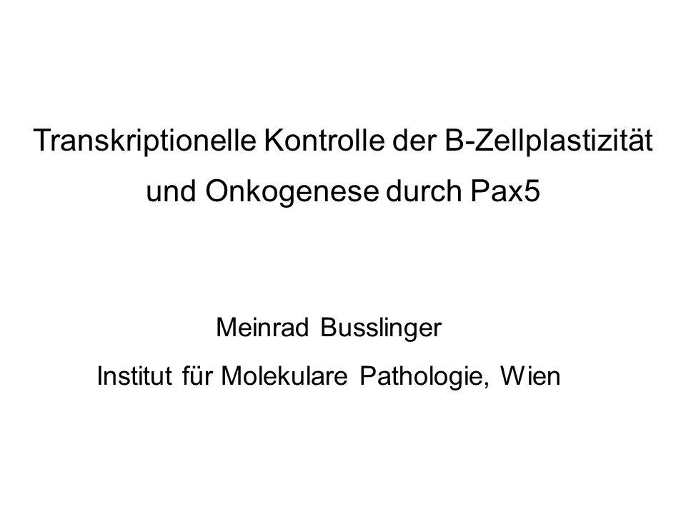 Transkriptionelle Kontrolle der B-Zellplastizität und Onkogenese durch Pax5 Meinrad Busslinger Institut für Molekulare Pathologie, Wien