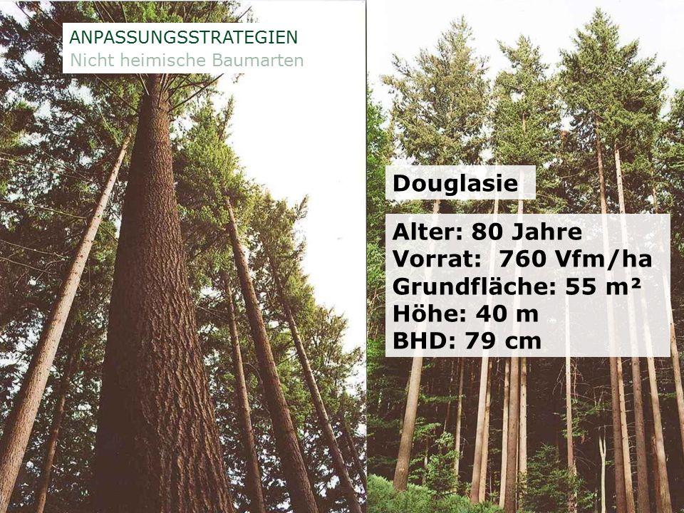 ÖSTERREICHISCHE BUNDESFORSTE AG / Unternehmensleitung /Norbert Putzgruber MUSTERSEITE 6 Baumartenverteilung in Niederösterreich Quelle: ÖWI 2000/2002