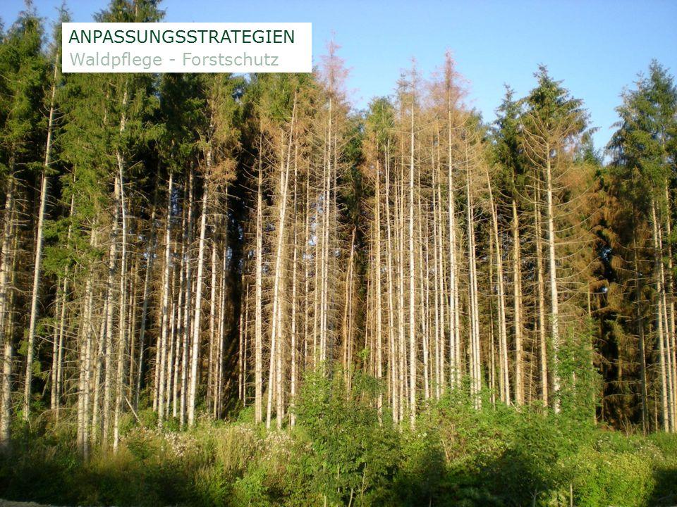 ÖSTERREICHISCHE BUNDESFORSTE AG / Unternehmensleitung /Norbert Putzgruber ANPASSUNGSSTRATEGIEN Waldpflege - Forstschutz