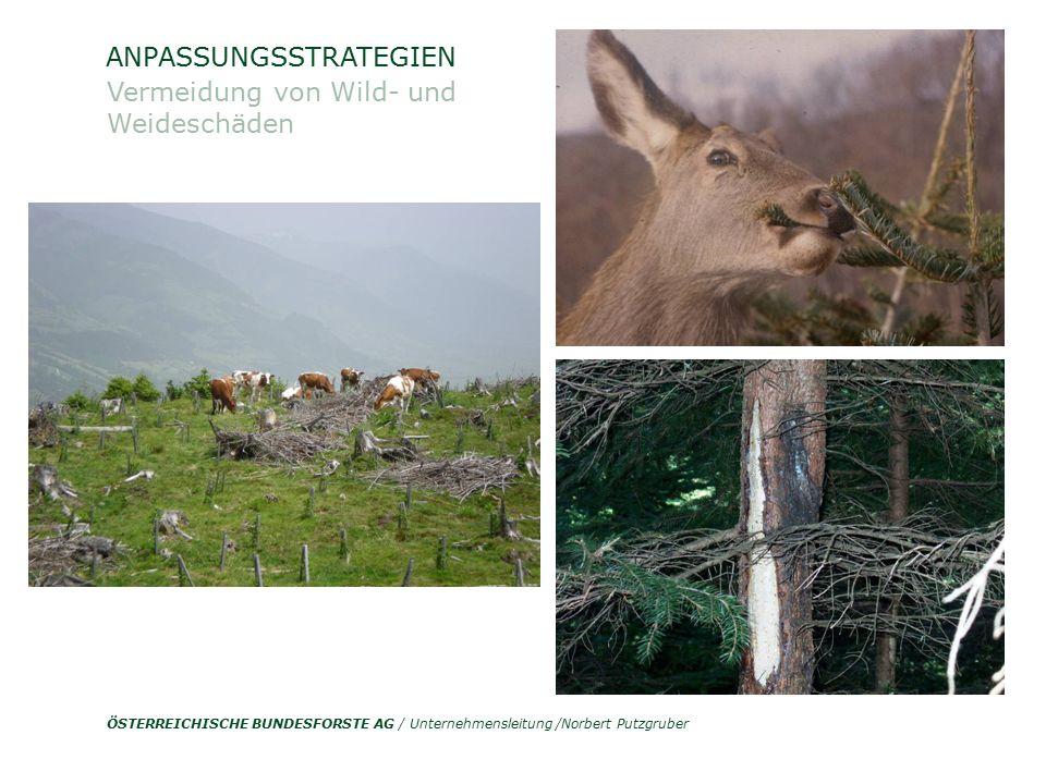 ÖSTERREICHISCHE BUNDESFORSTE AG / Unternehmensleitung /Norbert Putzgruber ANPASSUNGSSTRATEGIEN Vermeidung von Wild- und Weideschäden