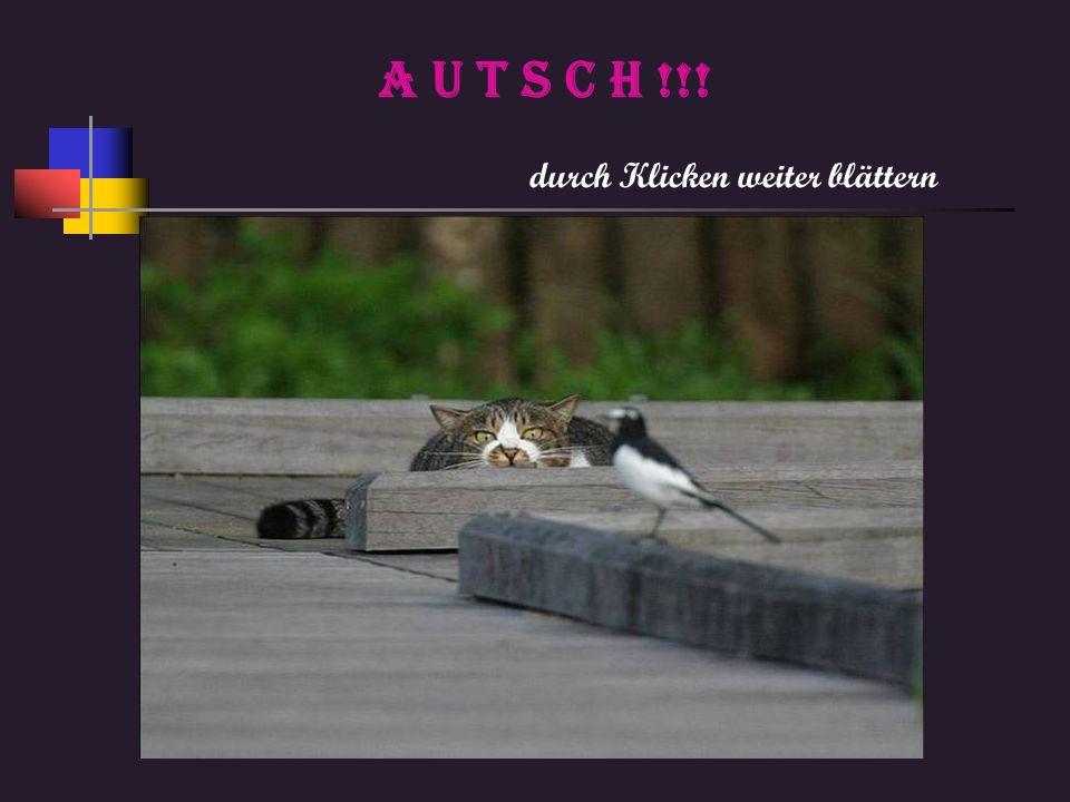 Ich bin richtig fertig, Kurt hat keine Tierbilder mehr für neue Präsentationen, schickt ihm welche.