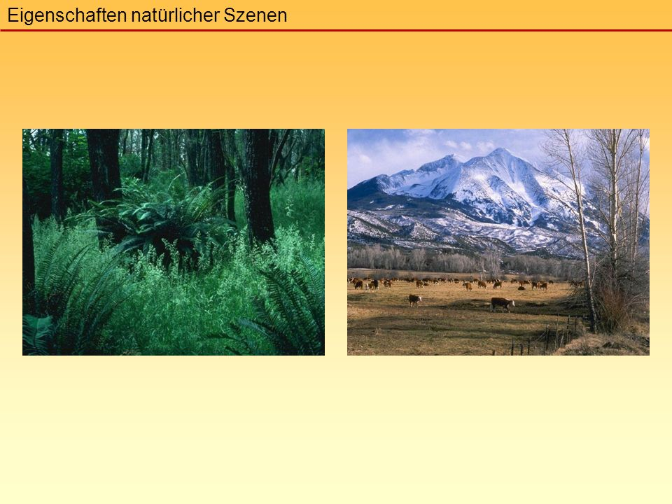 Eigenschaften natürlicher Szenen
