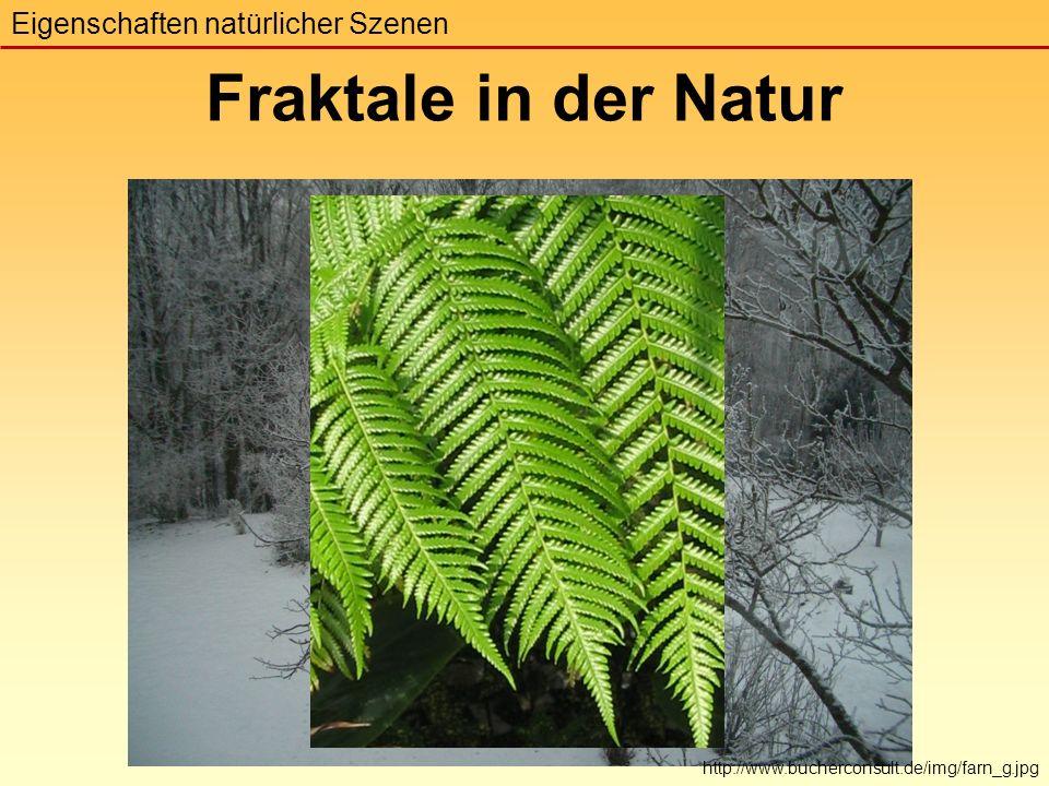 Fraktale in der Natur Eigenschaften natürlicher Szenen http://www.bucherconsult.de/img/farn_g.jpg