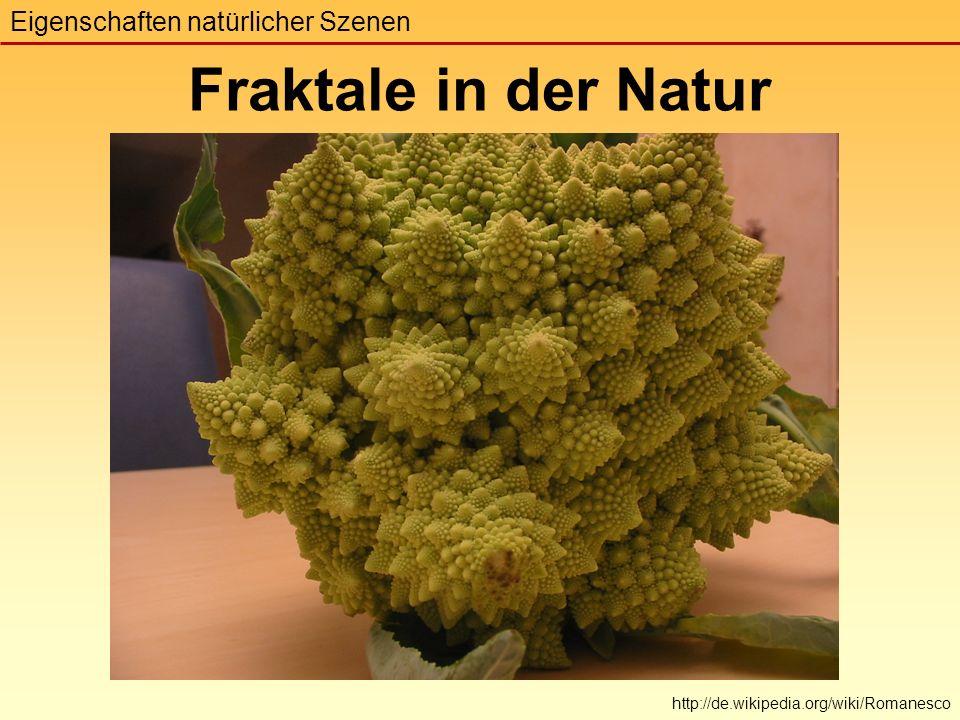 Eigenschaften natürlicher Szenen Fraktale in der Natur http://de.wikipedia.org/wiki/Romanesco