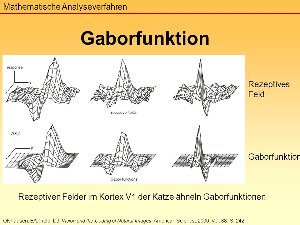 Rezeptiven Felder im Kortex V1 der Katze ähneln Gaborfunktionen Gaborfunktion Mathematische Analyseverfahren Olshausen, BA; Field, DJ: Vision and the Coding of Natural Images.