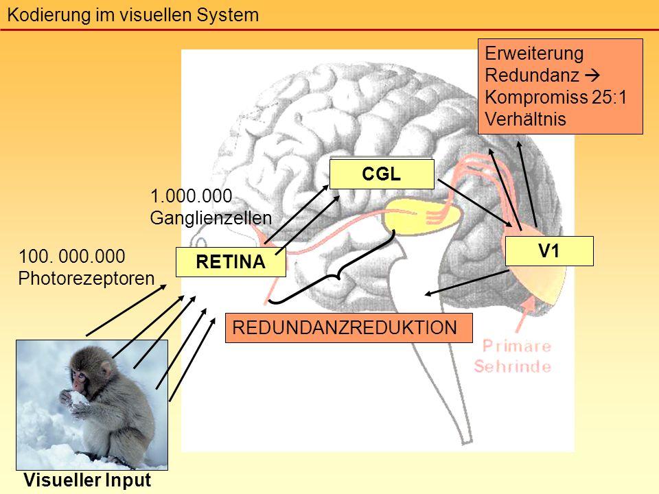 RETINA CGL V1 Visueller Input REDUNDANZREDUKTION Erweiterung Redundanz  Kompromiss 25:1 Verhältnis 100.