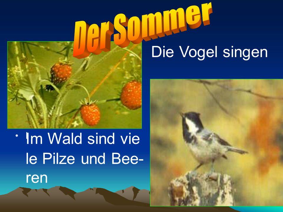 l Die Vogel singen Im Wald sind vie le Pilze und Bee- ren