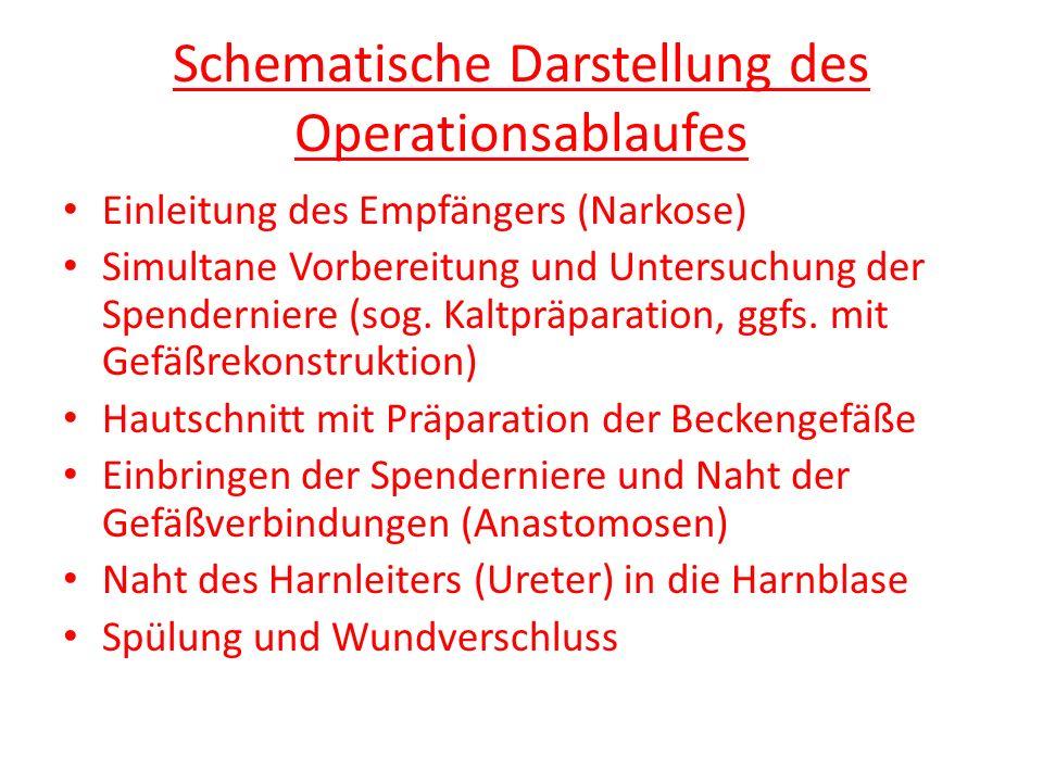 Schematische Darstellung des Operationsablaufes Einleitung des Empfängers (Narkose) Simultane Vorbereitung und Untersuchung der Spenderniere (sog. Kal