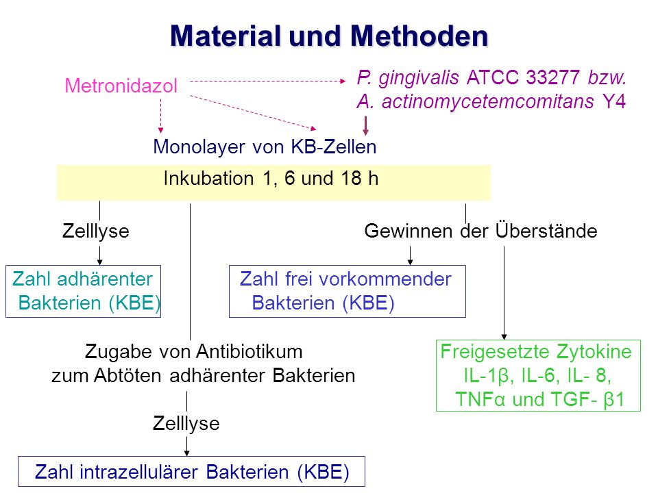 Metronidazol Material und Methoden P. gingivalis ATCC 33277 bzw. A. actinomycetemcomitans Y4 Monolayer von KB-Zellen Inkubation 1, 6 und 18 h Zelllyse