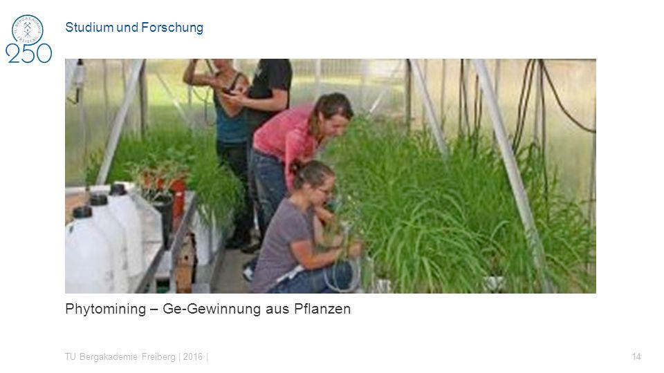 Phytomining – Ge-Gewinnung aus Pflanzen TU Bergakademie Freiberg | 2016 | 14 Studium und Forschung