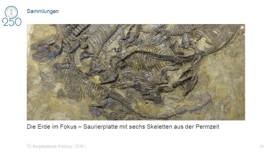 Die Erde im Fokus – Saurierplatte mit sechs Skeletten aus der Permzeit TU Bergakademie Freiberg | 2016 | 33 Sammlungen
