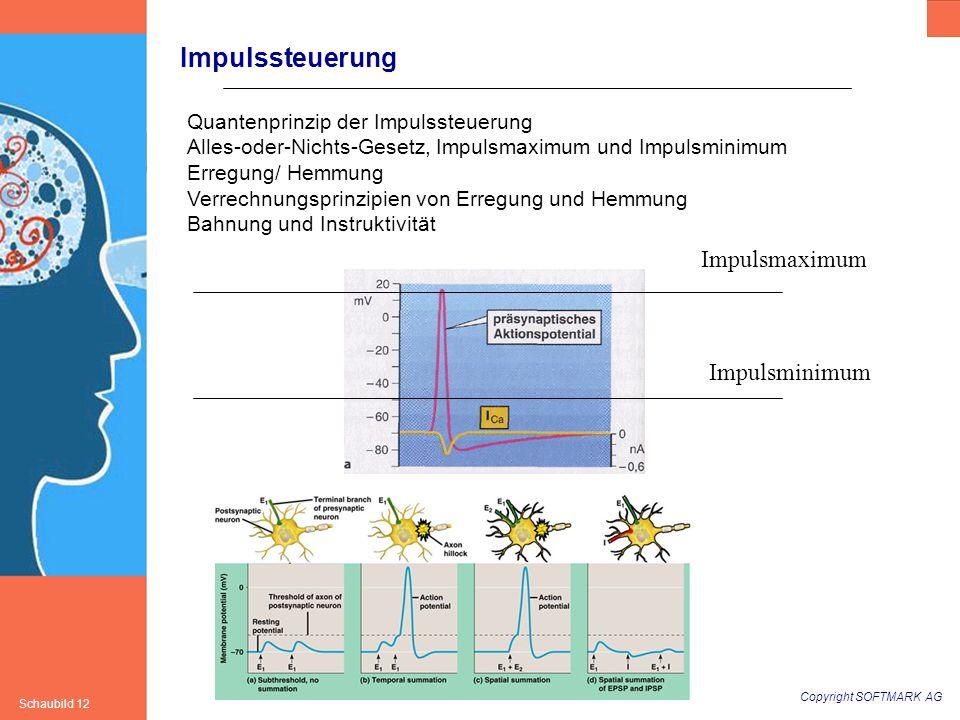 Copyright SOFTMARK AG Schaubild 12 Impulssteuerung Quantenprinzip der Impulssteuerung Alles-oder-Nichts-Gesetz, Impulsmaximum und Impulsminimum Erregu