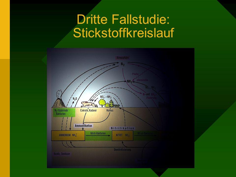 Dritte Fallstudie: Stickstoffkreislauf