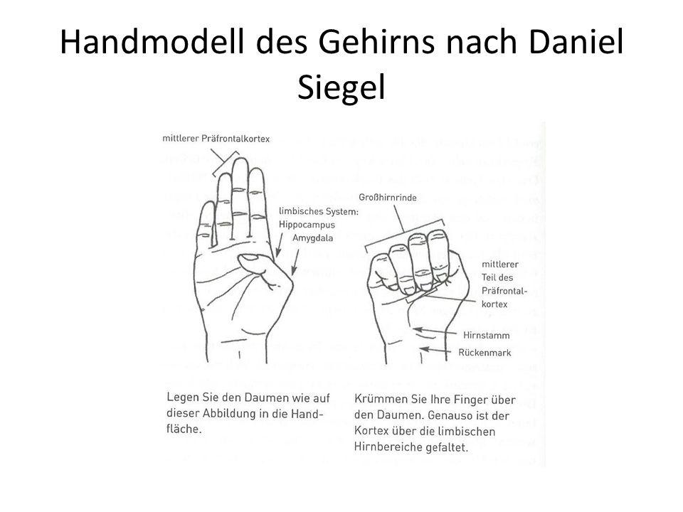 Handmodell des Gehirns nach Daniel Siegel