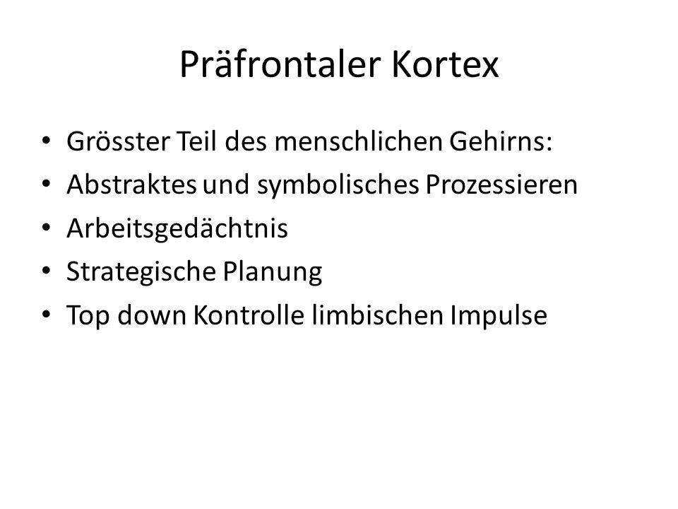 Präfrontaler Kortex Grösster Teil des menschlichen Gehirns: Abstraktes und symbolisches Prozessieren Arbeitsgedächtnis Strategische Planung Top down K