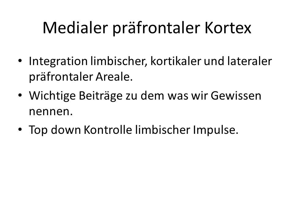 Medialer präfrontaler Kortex Integration limbischer, kortikaler und lateraler präfrontaler Areale. Wichtige Beiträge zu dem was wir Gewissen nennen. T