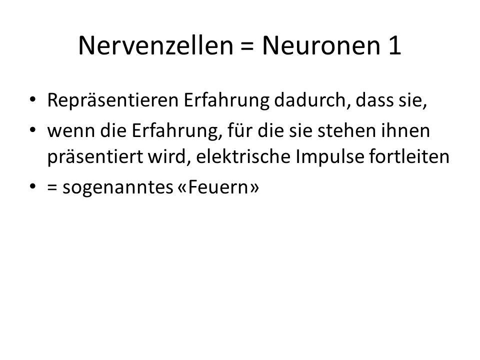 Nervenzellen = Neuronen 1 Repräsentieren Erfahrung dadurch, dass sie, wenn die Erfahrung, für die sie stehen ihnen präsentiert wird, elektrische Impul