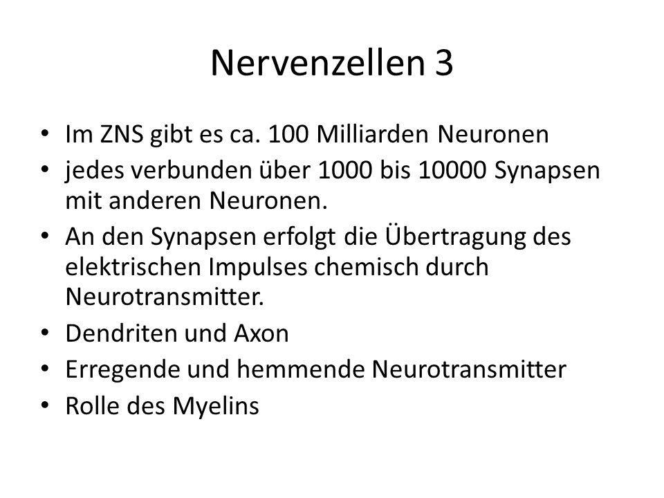 Nervenzellen 3 Im ZNS gibt es ca. 100 Milliarden Neuronen jedes verbunden über 1000 bis 10000 Synapsen mit anderen Neuronen. An den Synapsen erfolgt d