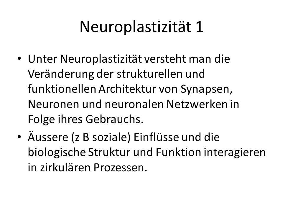 Neuroplastizität 1 Unter Neuroplastizität versteht man die Veränderung der strukturellen und funktionellen Architektur von Synapsen, Neuronen und neur