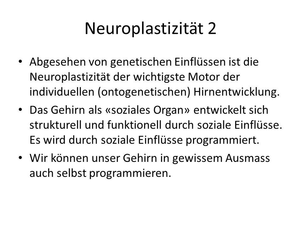 Neuroplastizität 2 Abgesehen von genetischen Einflüssen ist die Neuroplastizität der wichtigste Motor der individuellen (ontogenetischen) Hirnentwickl