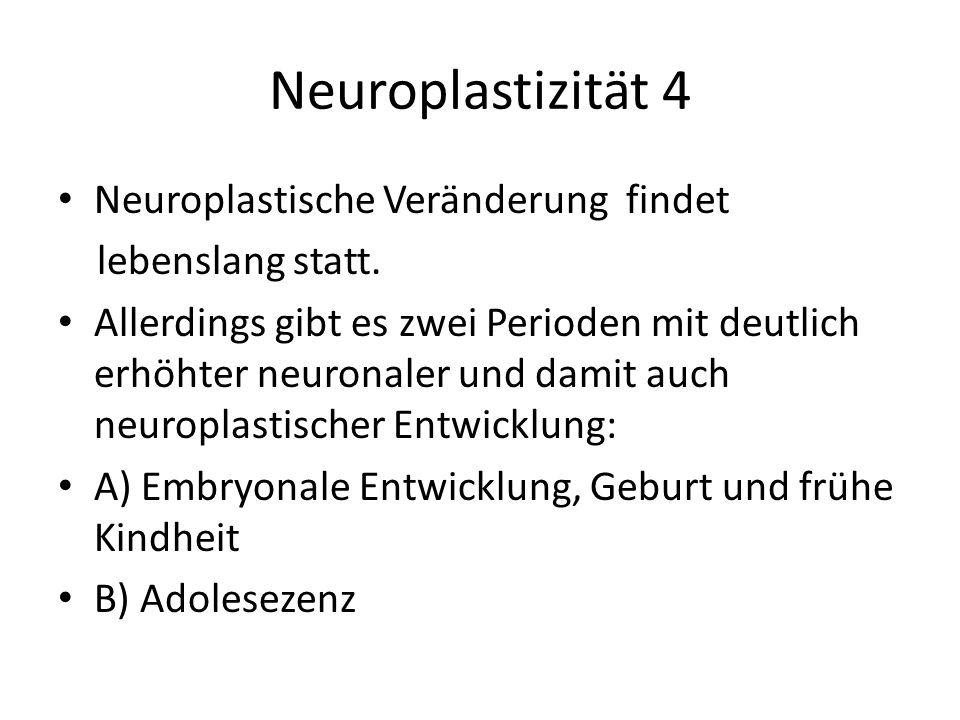 Neuroplastizität 4 Neuroplastische Veränderung findet lebenslang statt. Allerdings gibt es zwei Perioden mit deutlich erhöhter neuronaler und damit au