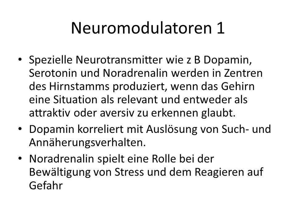 Neuromodulatoren 1 Spezielle Neurotransmitter wie z B Dopamin, Serotonin und Noradrenalin werden in Zentren des Hirnstamms produziert, wenn das Gehirn